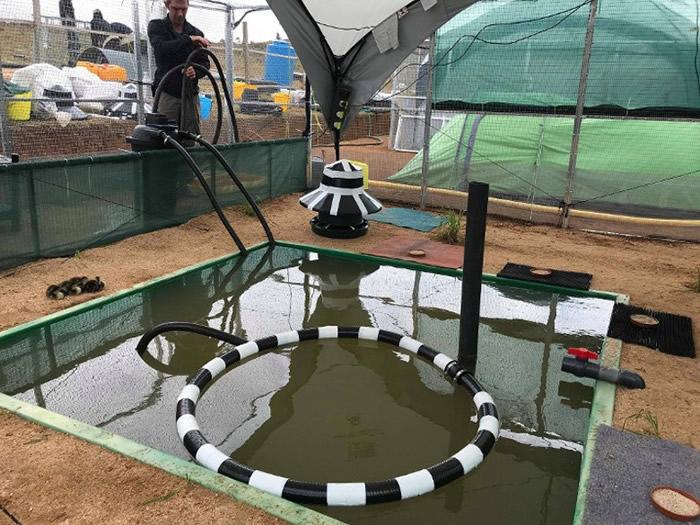 保育团体在英国的湿地改建浮动鸟舍作试验。
