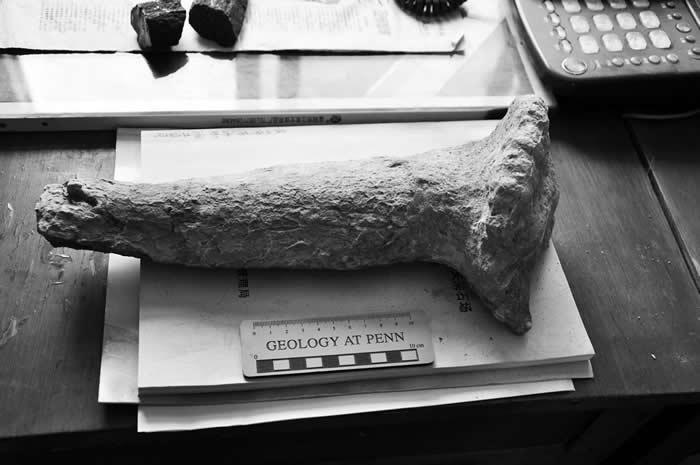 黄山市歙县发现恐龙新属种——地博安徽龙
