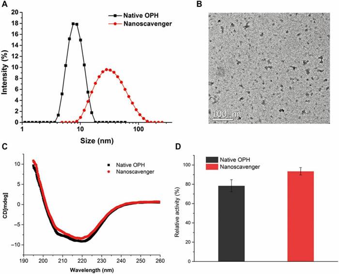 科学家首次制造出一种清道夫分子 能在啮齿动物中提供针对神经毒剂的持久防御性保护