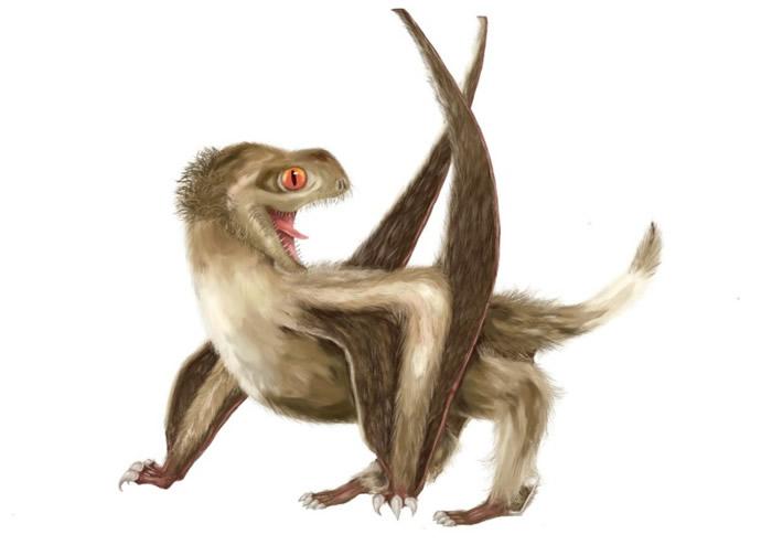 """地球上第一个穿""""羽绒衣""""的生物?短尾翼龙身体发现羽毛状毛发结构"""