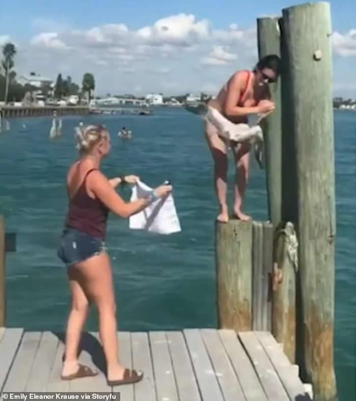 美国佛罗里达州圣彼得海滩海鸥被塑胶带所缠动弹不得 热心女游客解救