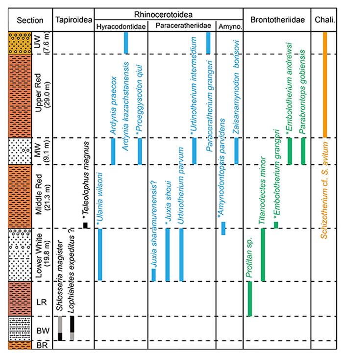 图2:额尔登敖包剖面奇蹄类化石的地层分布和延续。(白滨 供图)
