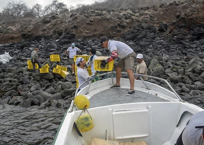 职员将过千条陆鬣蜥送往圣地亚哥岛。