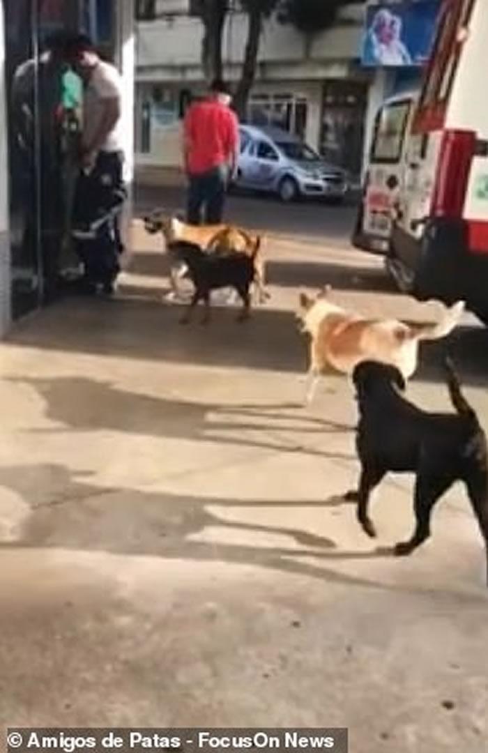 巴西流浪汉中风入院 6只忠犬追救护车彻夜门外留守
