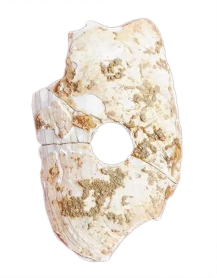 华南最早的穿孔蚌器