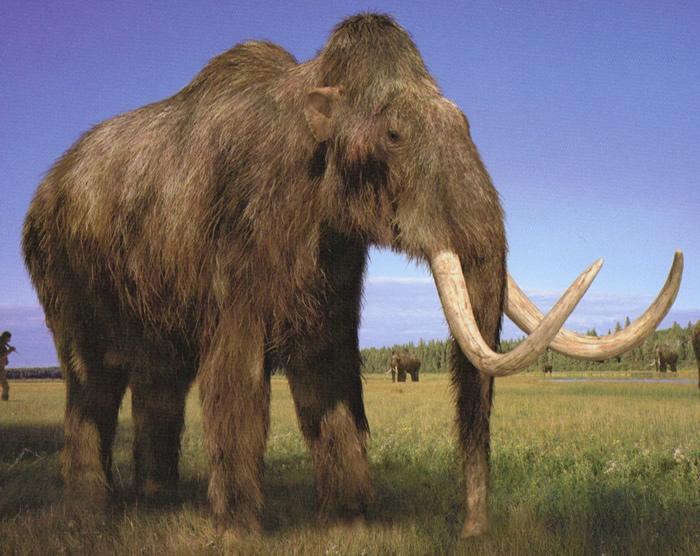 河北泥河湾发现160万年前草原猛犸象脚印及大量古人类打制的石器、动物化石
