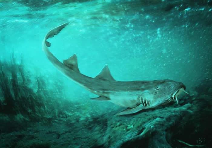 牙齿形似《Galaga》中的太空船 新发现的白垩纪鲨鱼命名为Galagadon nordquistae