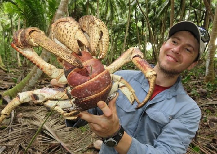莱德尔(图)专门研究蟹类。