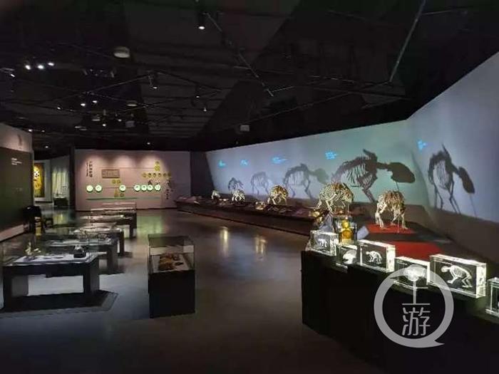 """重庆自然博物馆""""熊猫时代——揭秘大熊猫的前世今生""""特展"""