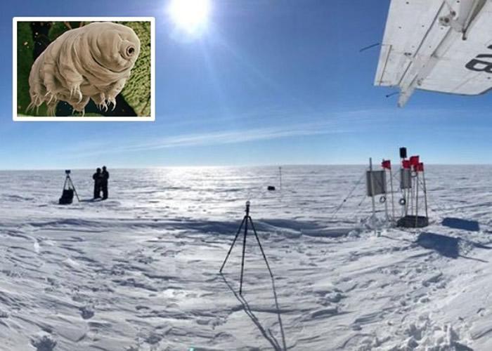 """南极洲惠兰斯冰原下的""""默瑟湖""""发现12万年前微生物""""水熊虫""""遗骸"""