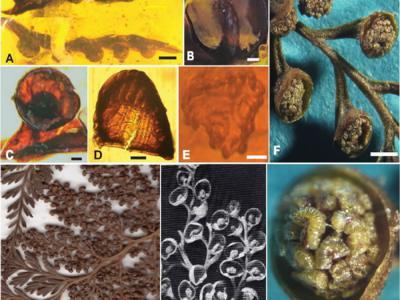哺乳动物的祖先可能是平足(跖行)动物