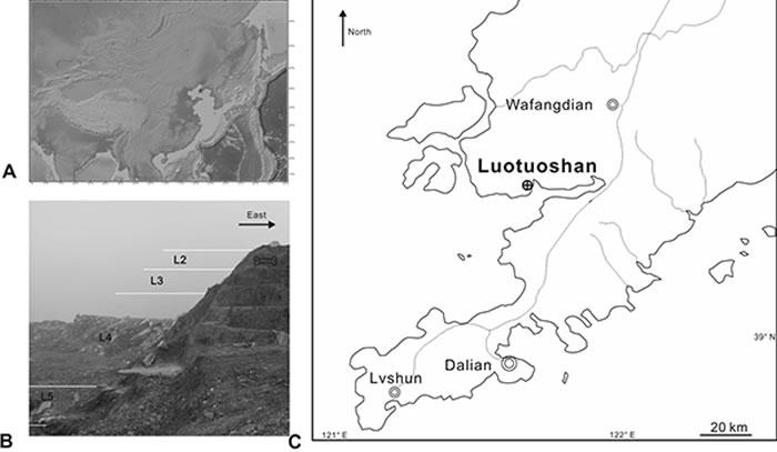 大连骆驼山金远洞的位置和剖面(江左其杲 供图)
