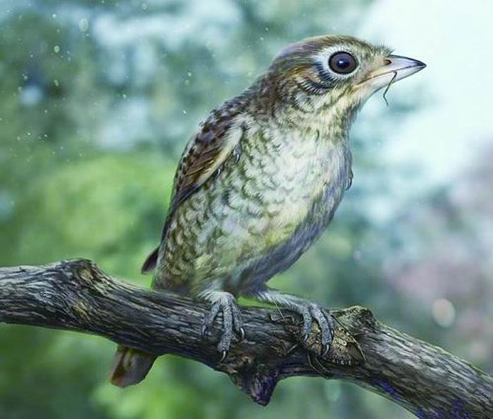 鸟足琥珀的生态复原图(张宗达 绘)