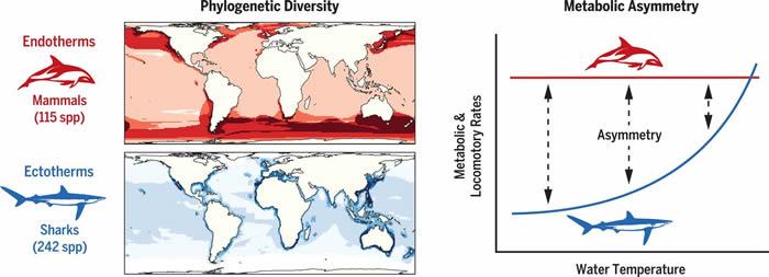 新研究发现在高纬度寒冷海洋中的温血哺乳动物和鸟类颇为兴旺