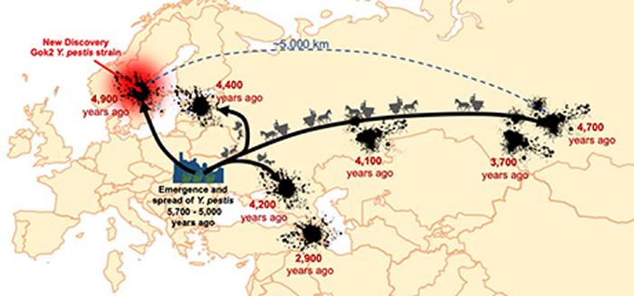 瑞典出土最古老鼠疫样本解开远古特里波耶文明消失之谜