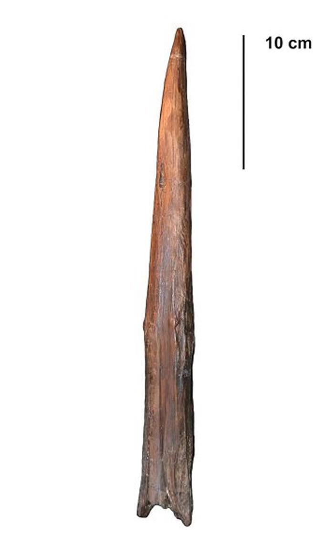 实验证明尼安德特人的长矛能有效狩猎