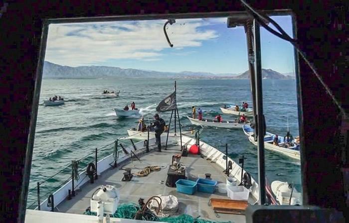"""环保组织""""海洋牧人""""在墨西哥沿岸阻止渔民危及濒危""""小头鼠海豚""""而遭到报复"""
