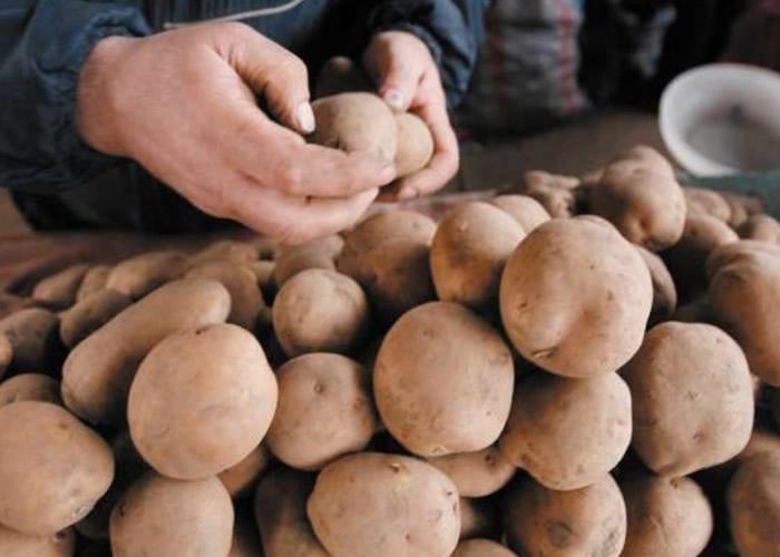 全球气候暖化影响英国土豆长度