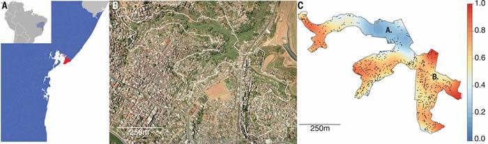巴西贫民窟中的登革热免疫力可防护寨卡病毒感染