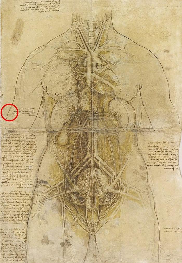 达芬奇的女性解剖图将于下月在英国加的夫展出。