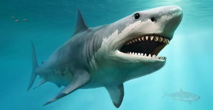 新研究揭示巨齿鲨灭绝的原因:海洋温度的变化和大白鲨的崛起