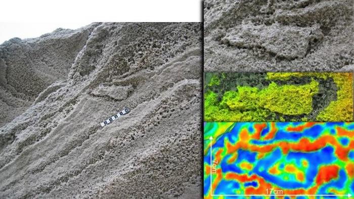 直布罗陀沙质沉积物中发现尼安德特人足迹