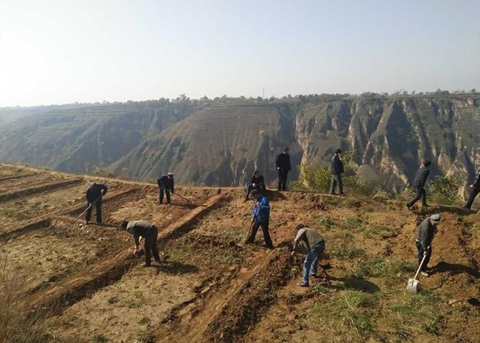 甘肃平凉进行造林工程。