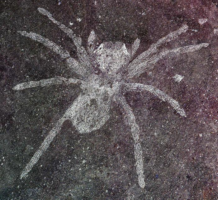韩国Namhae地区下白垩统晋州组发现眼睛仍能反射光线的蜘蛛化石