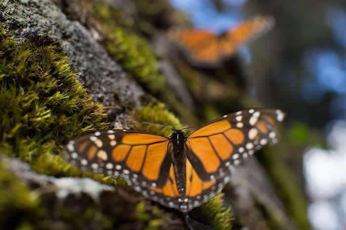 全球昆虫或在100年内灭绝 将导致生态灾难