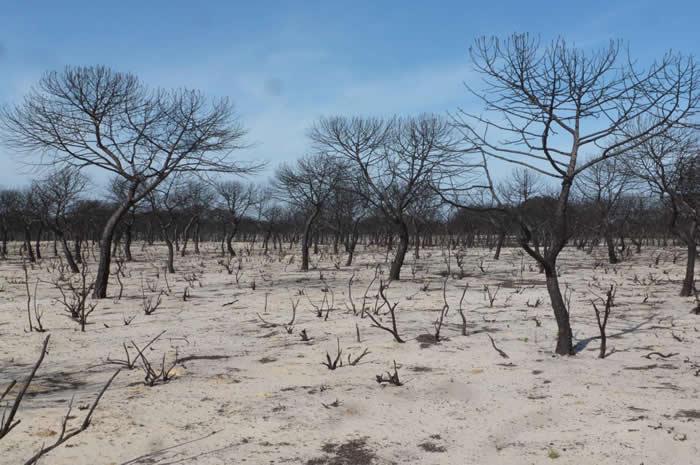 森林大火也为我们创造机会来弥补受到影响的生态系统的自然价值