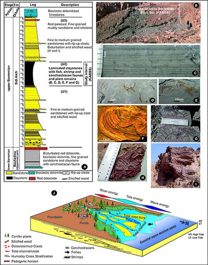 突尼斯Chotts盆地含化石地层(A-C)、产出化石(D-I)及古环境重建(J)。供图:吴飞翔