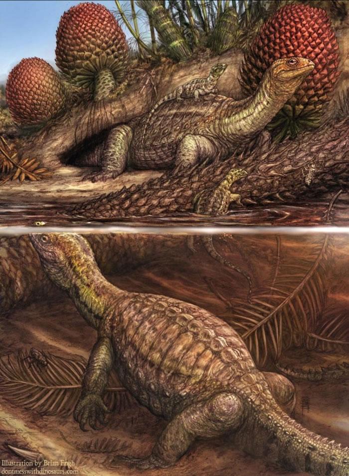 插画中一群无壳的罗氏祖龟(Pappochelys rosinae)正在探索一座三叠纪湖泊。 ILLUSTRATION BY BRIAN ENGH