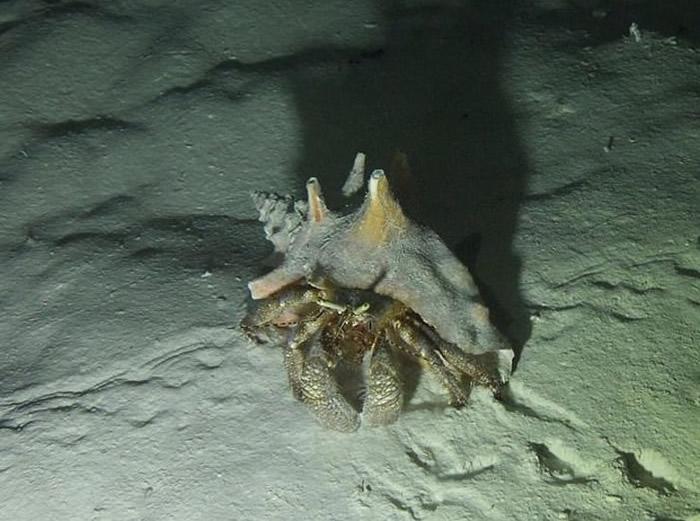 中美洲国家伯利兹海底巨型蓝洞神秘面纱揭开 内有钟乳洞海螺墓
