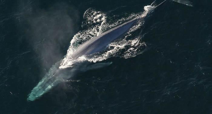 蓝鲸能在合适的时间迁徙到食物丰富的地方是依靠记忆而非环境线索