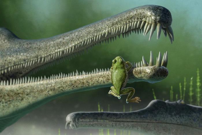"""美国亚利桑那州发现2.16亿年小青蛙遗骸""""靑利"""" 以三叠纪大陆的靑利地质构造命名"""