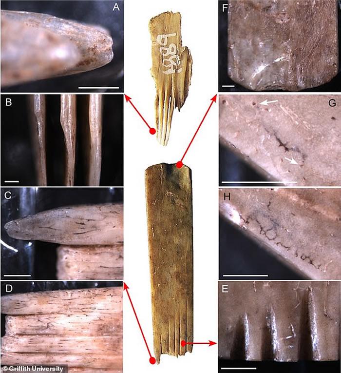 """汤加王国发现2700年前由人类和海鸟骨头制成的""""纹身工具"""""""