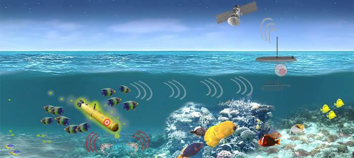 美国国防部将启动有关借助海洋动物鱼、虾探测潜艇的项目