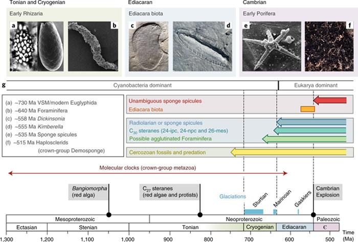 化石脂肪表明动物出现的时间比目前认为的要晚