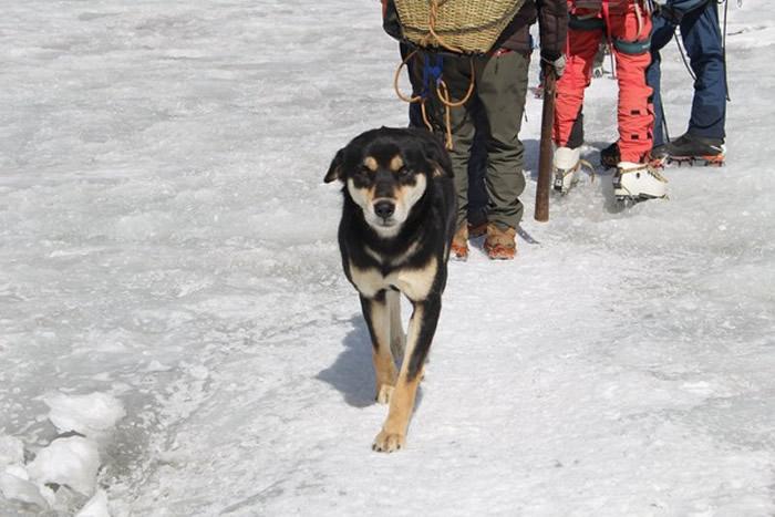 梅乐走在登山队最前头,不靠任何装备。