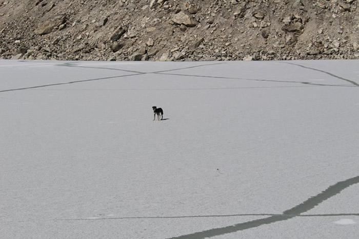 刚开始梅乐不肯跟登山队一起回营地,它就这样独自在冰川上露宿了2夜。