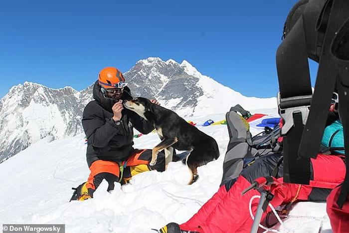 流浪狗梅乐(Mera)的一些登山照片