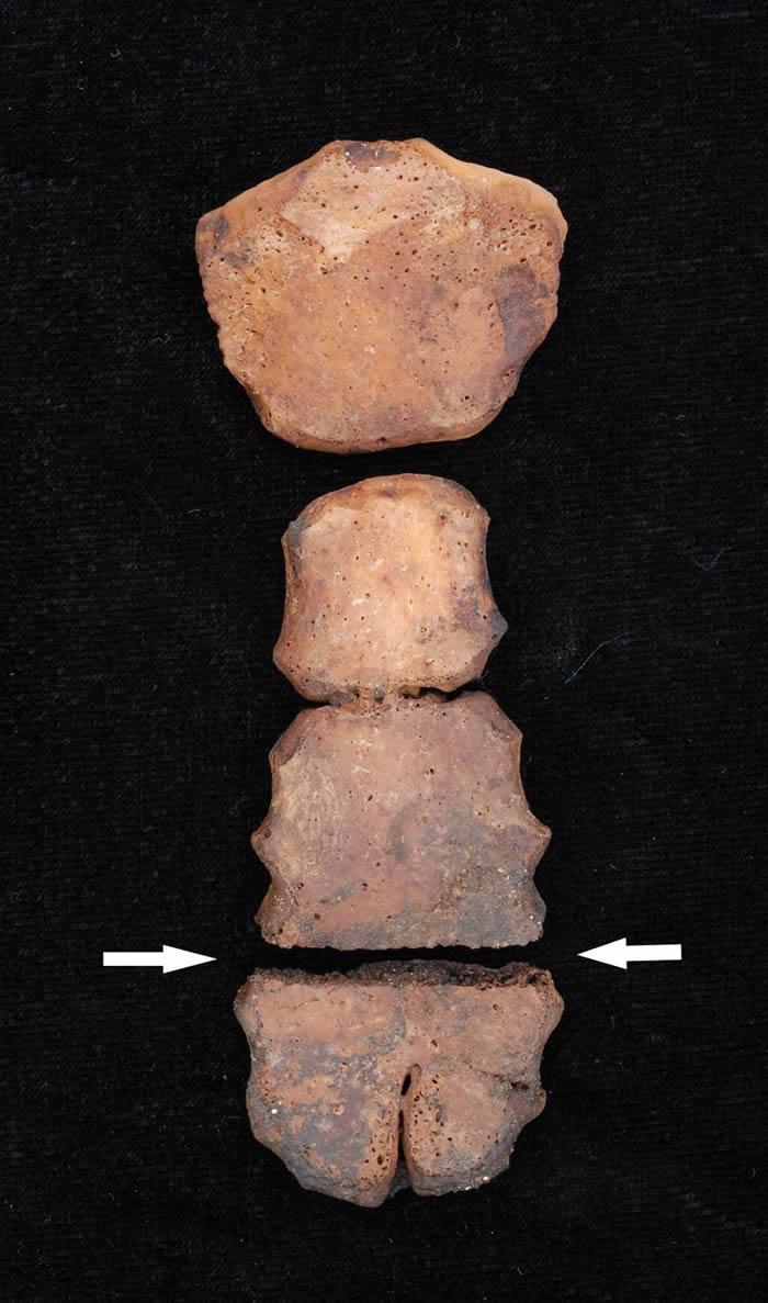美洲最大儿童献祭遗址:秘鲁发现古代奇穆王国大规模献祭遗址 包括137具儿童骸骨