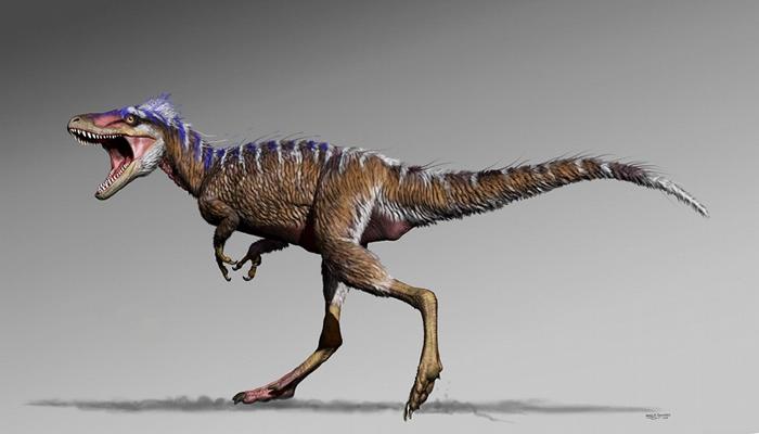 """新发现的小不点""""无畏厄运龙""""Moros intrepidus有助了解暴龙是如何演化成庞然大物的"""