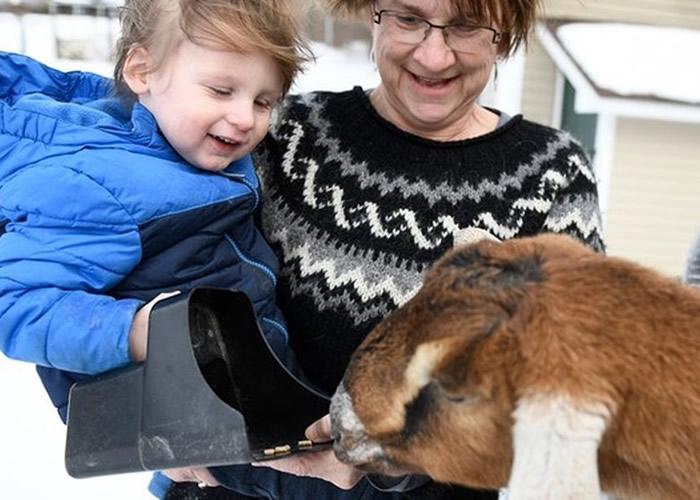 美国佛蒙特州费尔黑文一只山羊力压猫狗及沙鼠等多种动物当选镇长