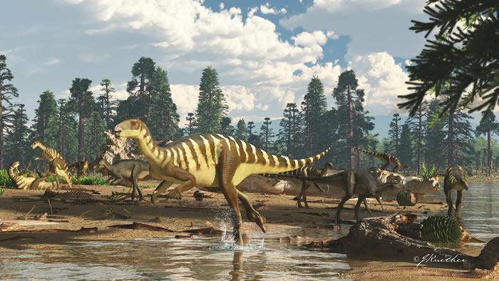 """澳大利亚维多利亚州发现一种体型与袋鼠差不多的白垩纪""""小恐龙""""Galleonosaurus"""