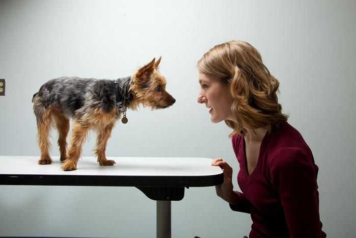 研究人员调查了1681 组狗与主人的性格。 结论:狗狗与主人往往有相似的行为。 PHOTOGRAPH BY VINCENT J. MUSI, NAT GEO I