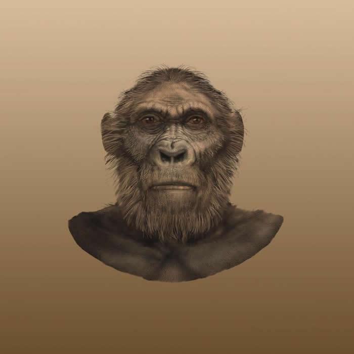 """生活在180万年前的人类早期祖先""""罗百氏傍人""""的牙齿没有珐琅质 类似高尔夫球"""