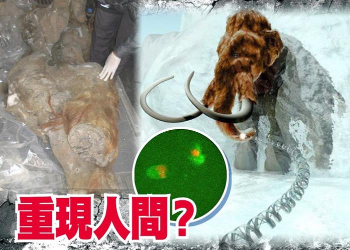 史前巨兽复活?日本近畿大学团队有望培养长毛象细胞核再生