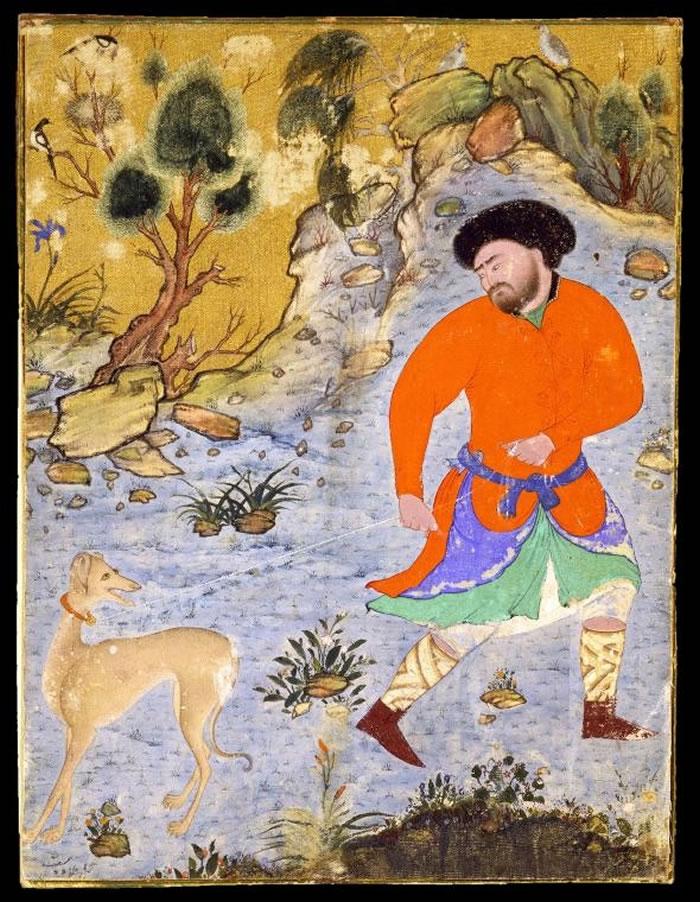 到了中世纪时期,细犬(sighthounds)──比如这幅16世纪波斯细密画(Persian miniature)上所描绘的萨路基猎犬(Saluki),受到亚洲