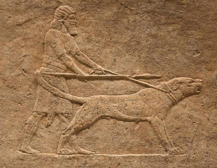 这个令人望而生畏的犬种被称为「獒犬」(molosser),牠们是英国獒犬(mastiff)和圣伯纳犬(St. Bernard)等现代品种的祖先。 在这幅公元前7